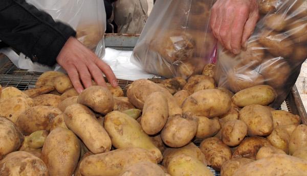 patates936