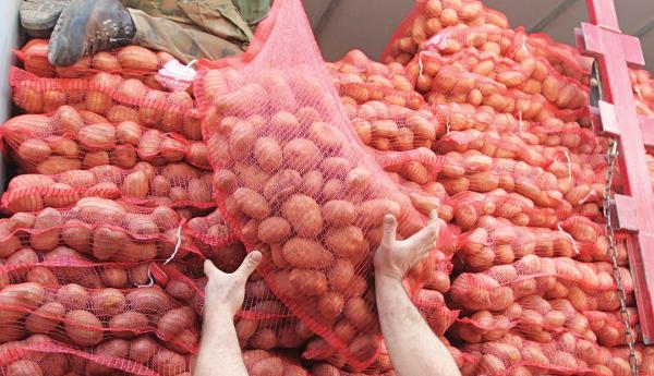 patates56354