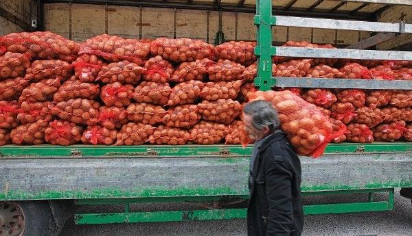 patates9568