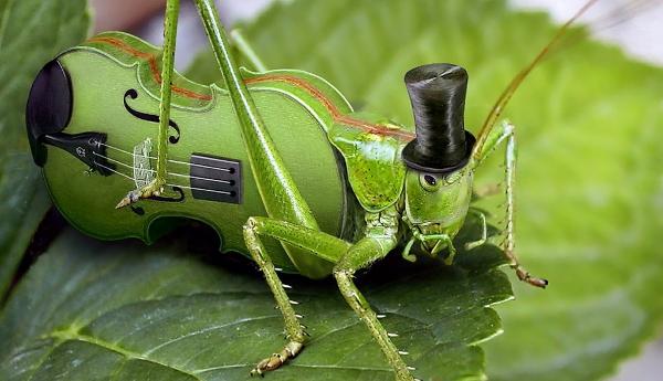 cricket545