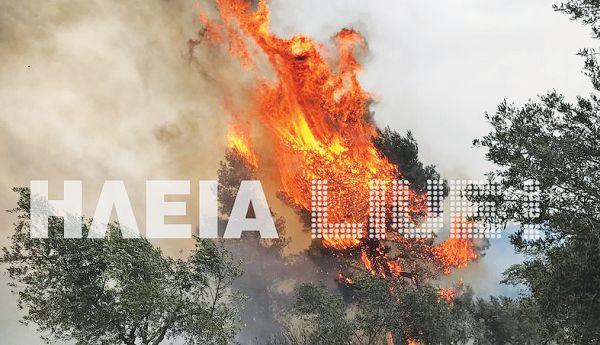 ilia1_iefimerida
